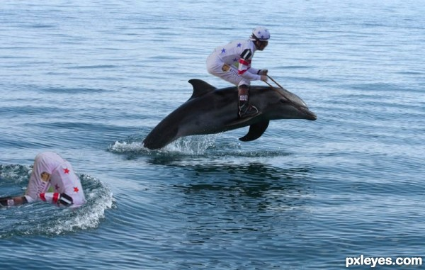 Creation of Dolphin Derby: Final Result