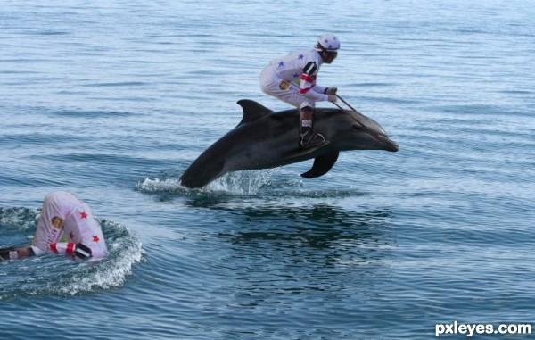 Dolphin Derby
