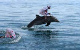 DolphinDerby