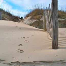 SandBetweenYourToes