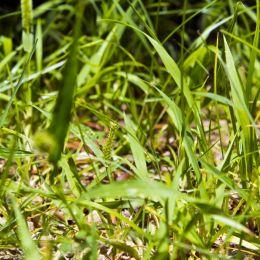 Goodoldgrass