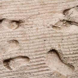 Sandyfootprints