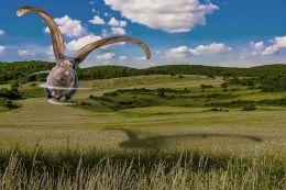 Whirly Gig Bunny