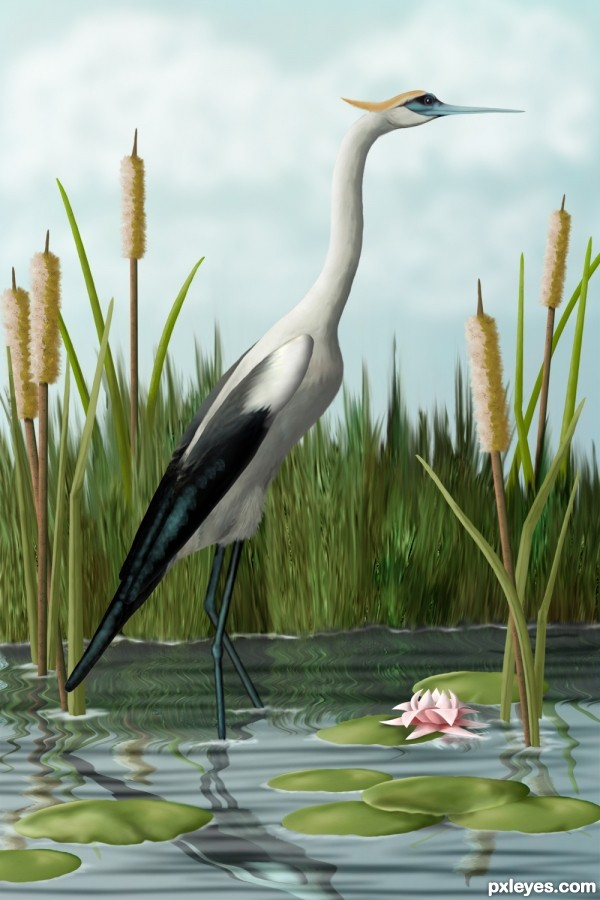 Crane in Cattails