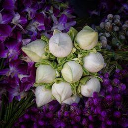 Lotuswhite
