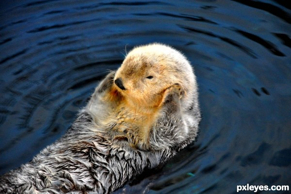The sweet sea otter