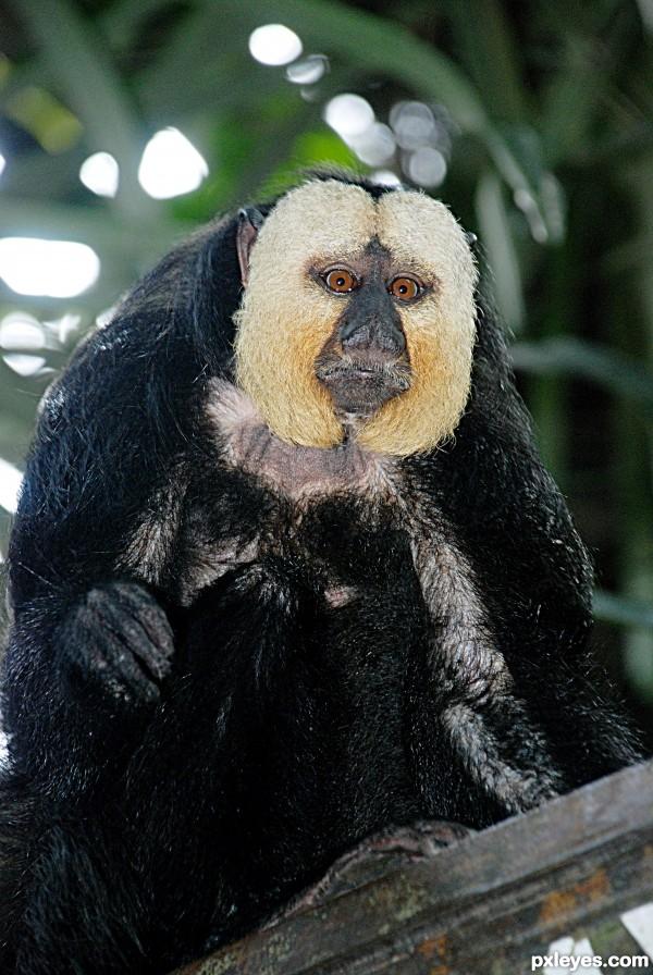 monkey seeing
