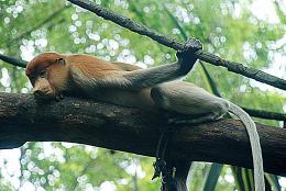 monkeyresting