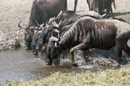 At the water hole.