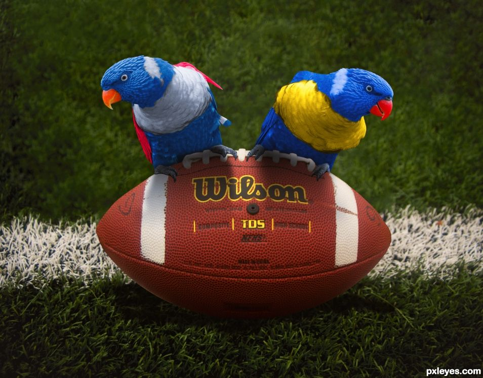 Super Bowl Birds