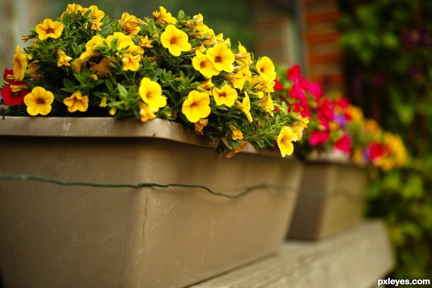 Beauty in a flowerbox