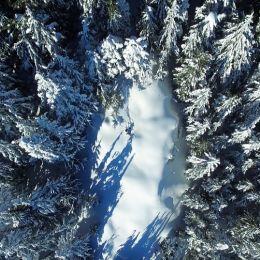 Snowintheforrest
