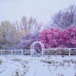 Winter returns Picture