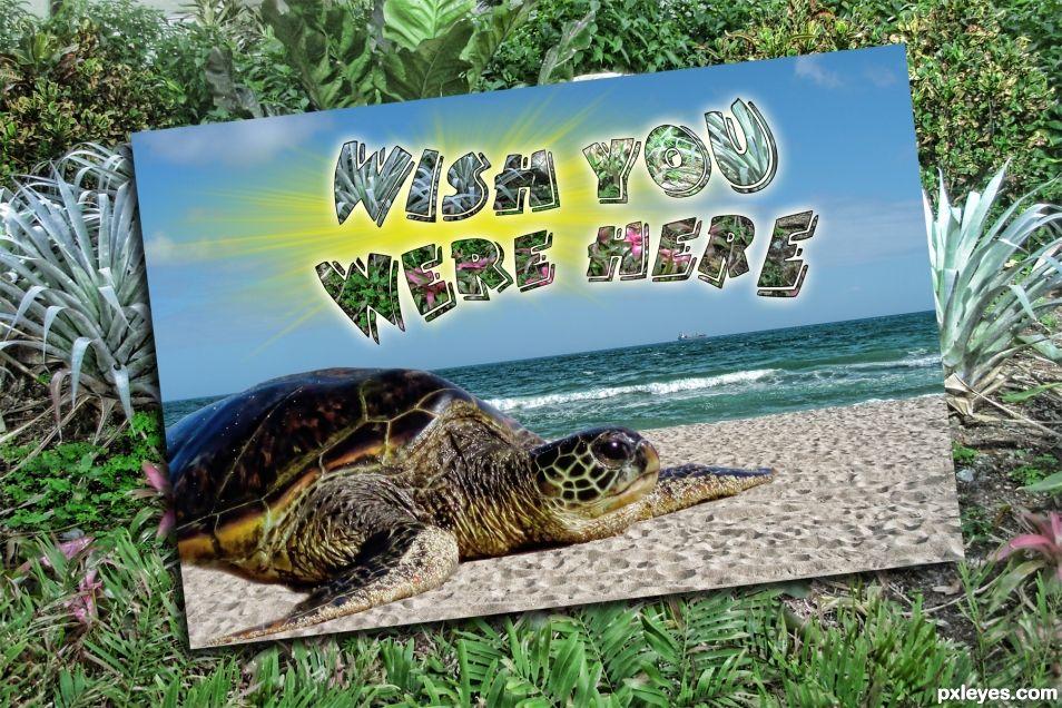 Sea Turtles are Cute