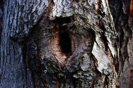 Treenot