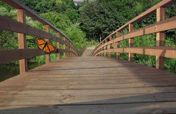 The wooden bridge park