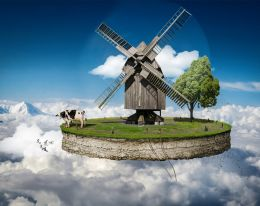 Oh my cow! Picture
