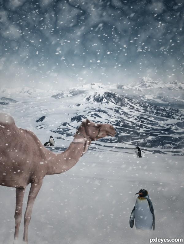 Lost Camel
