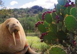 ArizonaWalrus