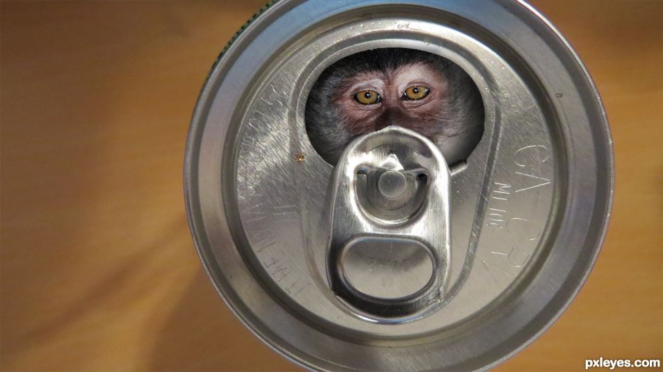 Monkey In the Soda