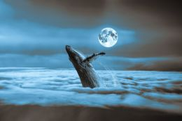 moonlit whale