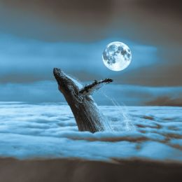 moonlitwhale