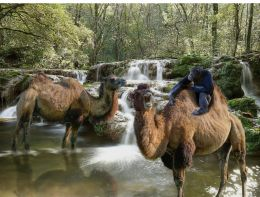 Camels Paradise