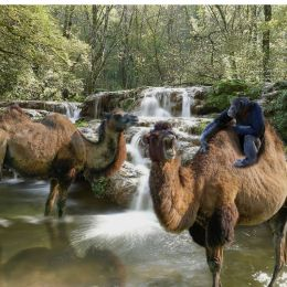 CamelsParadise