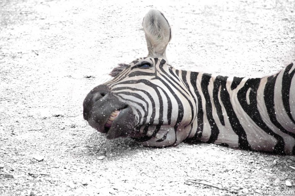 Go home, zebra, youre drunk!