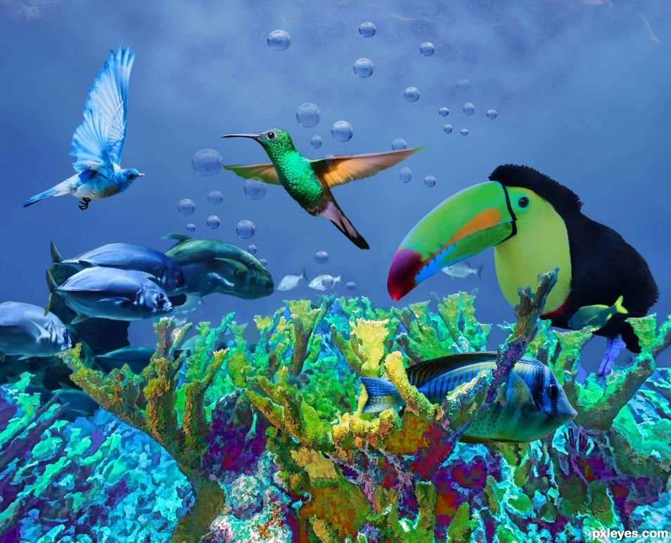 Swimming birds