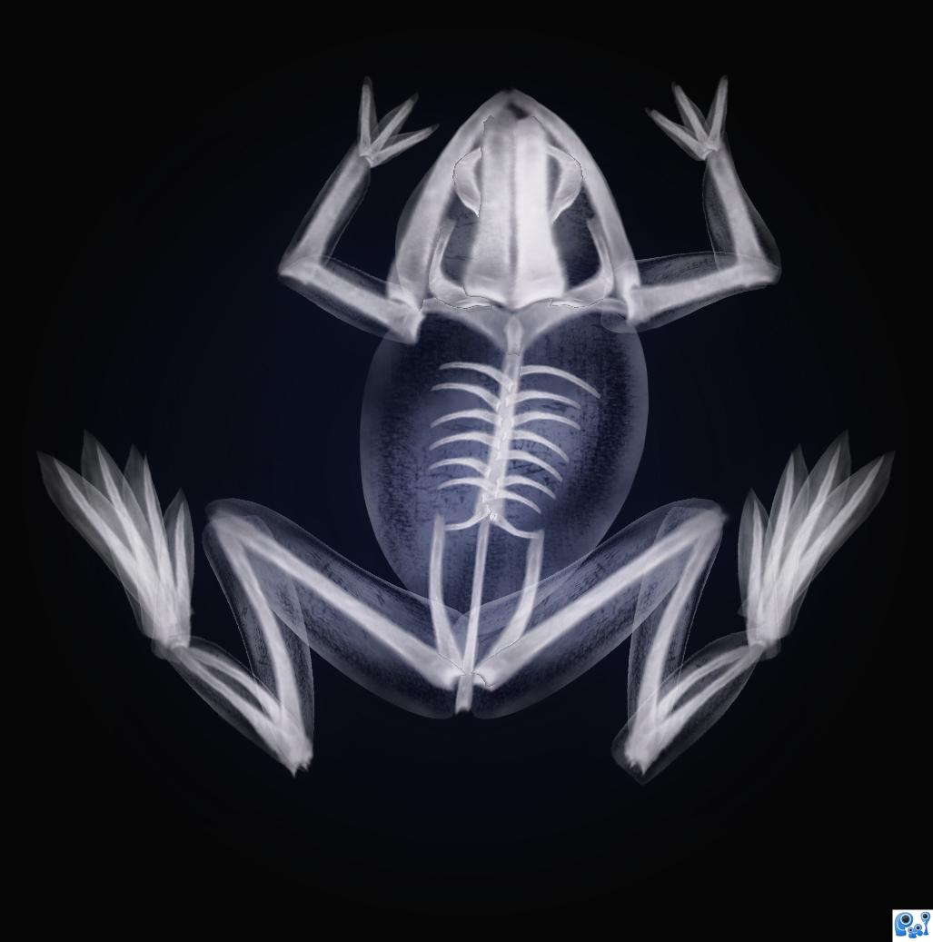 Frog X-ray picture, by nasirkhan for: x rays photoshop