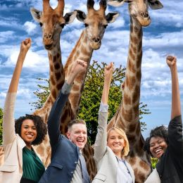 TheGiraffeGroup