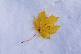 Autumn in the Snow