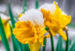 Spring?!?