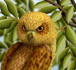 Golden Headed Owl