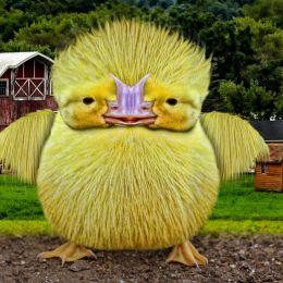 ChubbyChick