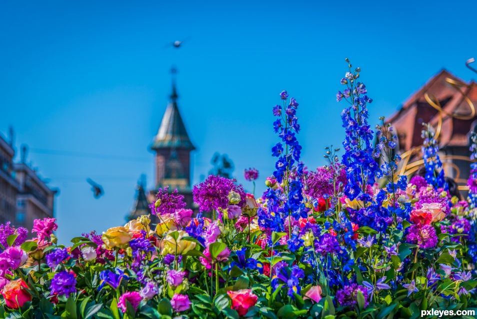 the city of flowers