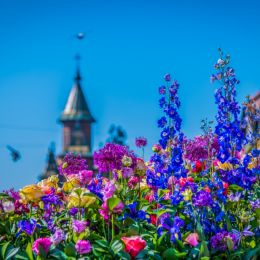 thecityofflowers