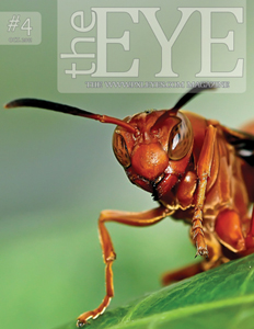 Pxleyes magazine - the eye 04