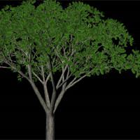 Creating A Tree - Paint Effects - Maya Tutorial - Pxleyes com