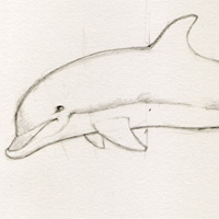 Create A Dolphin In Four Easy Steps Traditional Drawing Tutorial