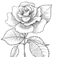 How to draw a rose traditional drawing tutorial pxleyes how to draw a rose traditional drawing tutorial ccuart Images
