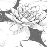 Traditional drawing tutorial directory overview page 3 for How to draw a hard flower
