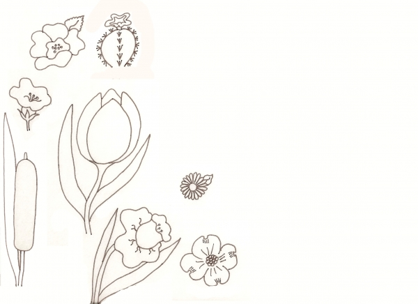Flower Drawing Lessons Traditional Drawing Tutorial Pxleyescom