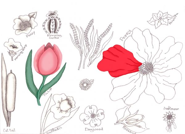 flower drawing lessons traditional drawing tutorial