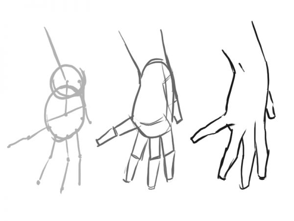 how to draw a proportioned hand structure traditional drawing