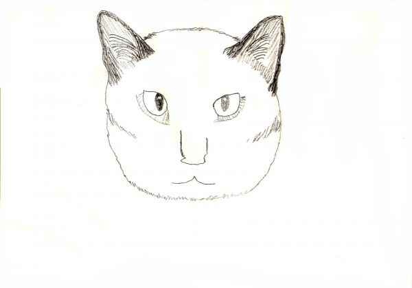 Line Drawing Cat Face : Learn how to draw four different cats traditional drawing