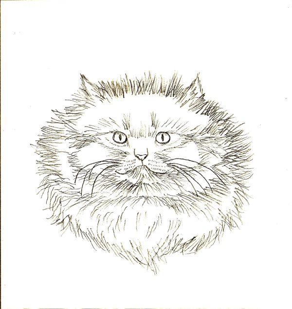 Learn How To Draw Four Different Cats Traditional Drawing Tutorial