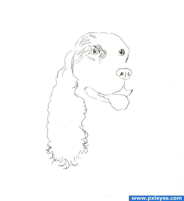 Lps Cocker Spaniel How To Draw It Easy For Kids