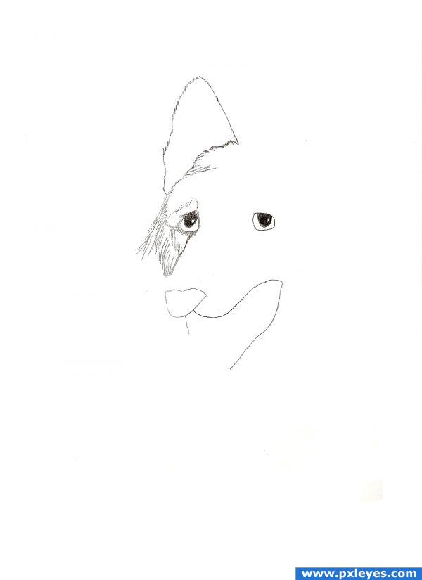 Learn How To Draw 7 Different Types Of Dogs Traditional Drawing